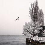 Freiheit in Konstanz - Shot by Orhan Yilmaz - Obey24.com